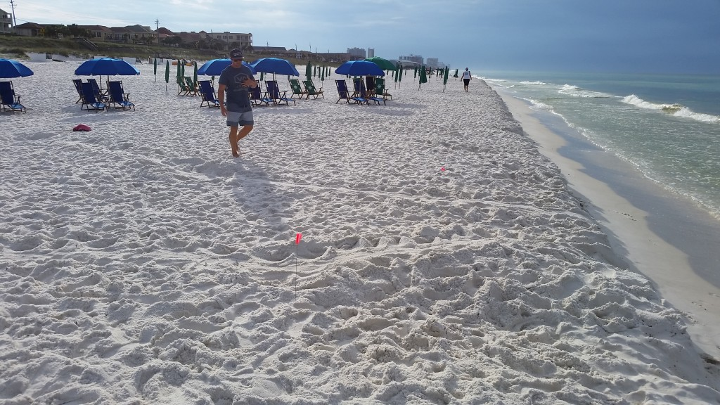 A LOGGERHEAD FROUND BY BEACH VENDOR TRAVIS MISSED BY VOLUNTEER